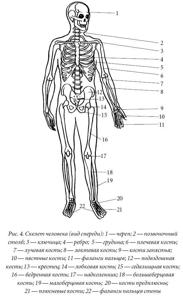 Рисунок крупных суставов человека методика бубновского для лечения тазобедренного сустава